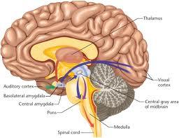 Hersenveranderingen